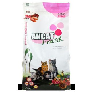 Ancat Fresh Gatos Kitten
